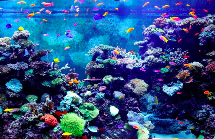 Photo du SEA Aquarium à Singapour