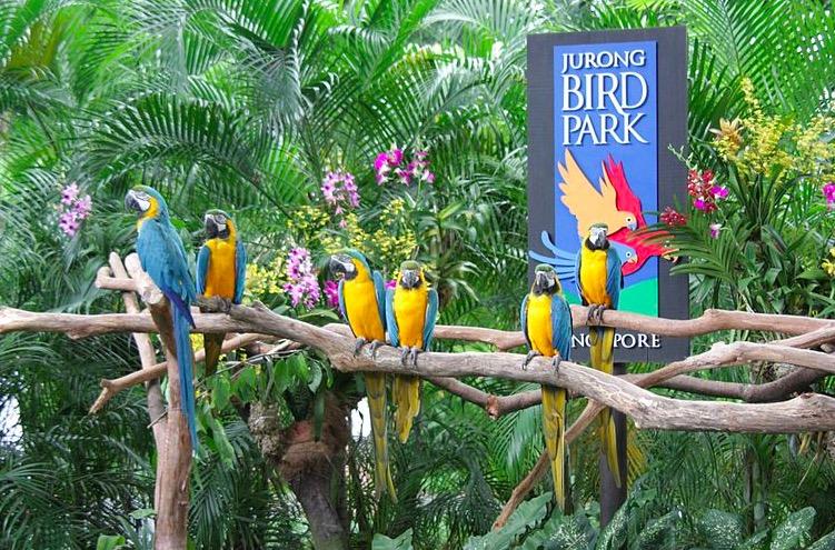 Photo du Parc Ornithologique de Jurong à Singapour